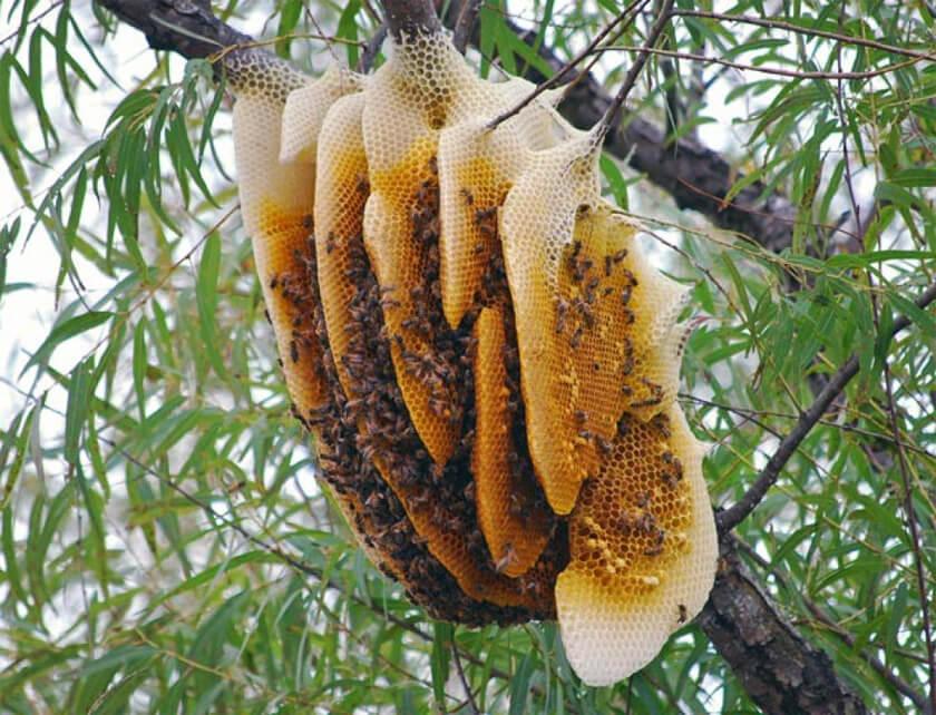 giá mật ong
