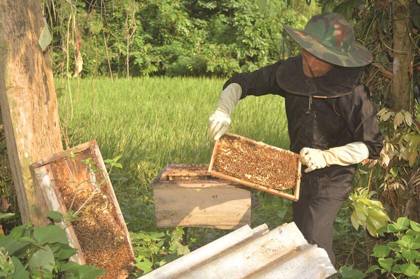 mật ong nuôi giá bao nhiêu